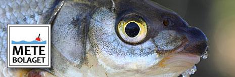 Har du upptäckt vimmafiske ännu?